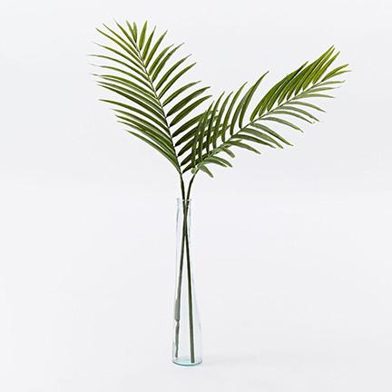 Pretty palm leaf